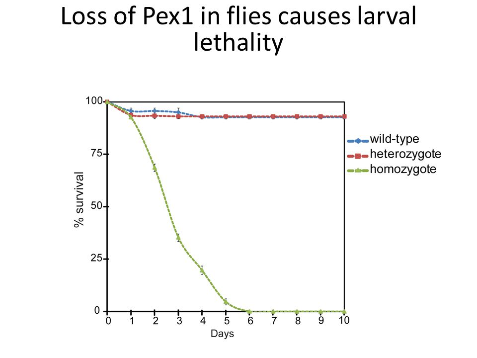 Loss of Pex1 in flies causes larval lethality