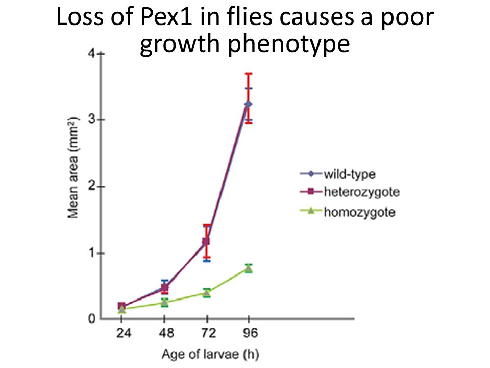 Loss of Pex1 in flies causes a poor growth phenotype