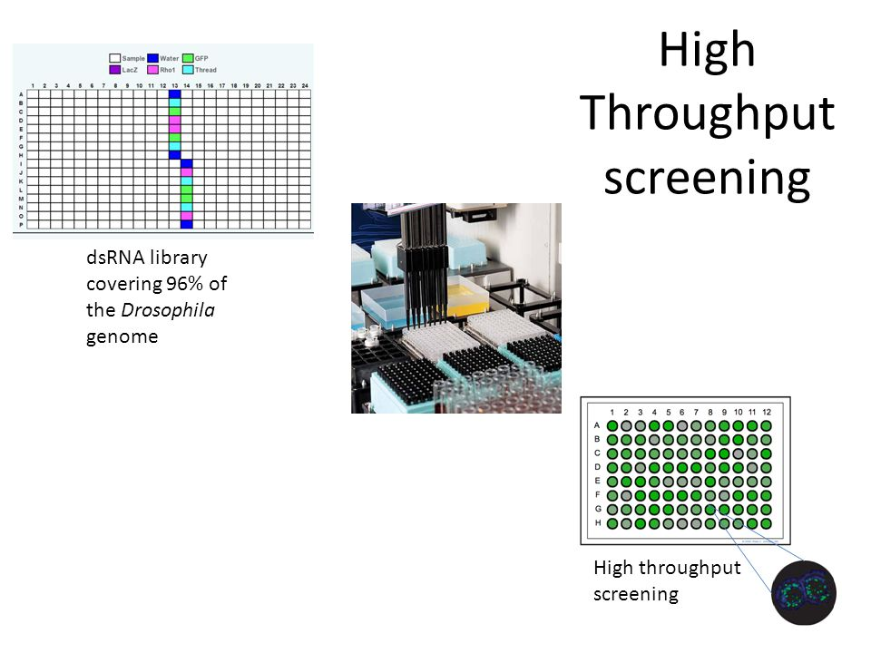 High Throughput screening