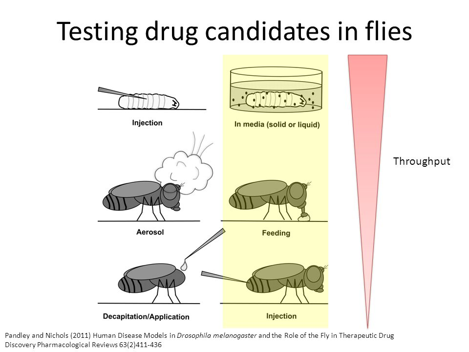 Testing drug candidates in flies