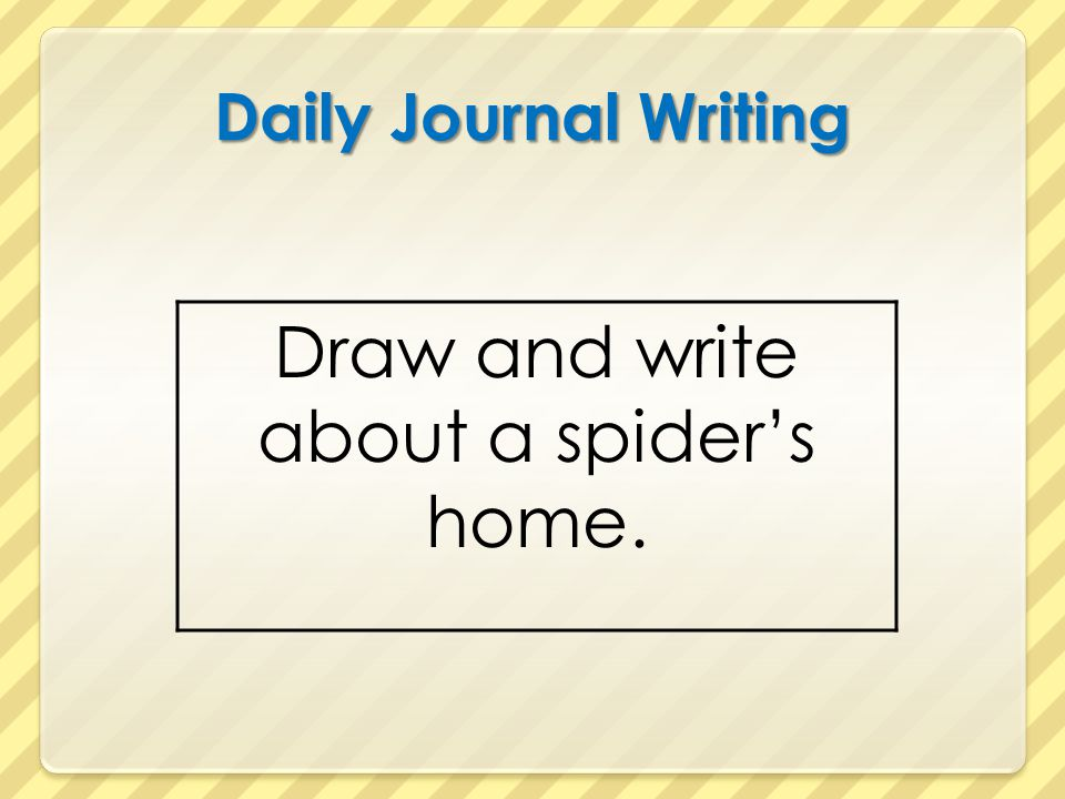 Draw and write about a spider's home.