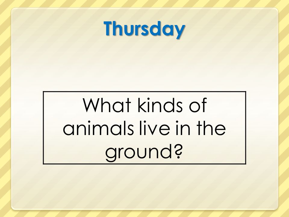 What kinds of animals live in the ground