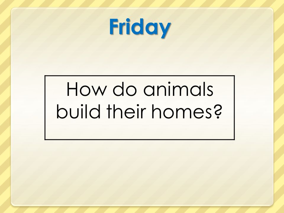How do animals build their homes
