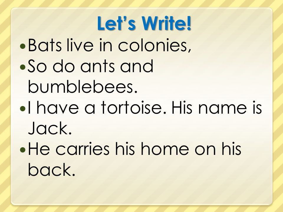 Let's Write! Bats live in colonies, So do ants and bumblebees.