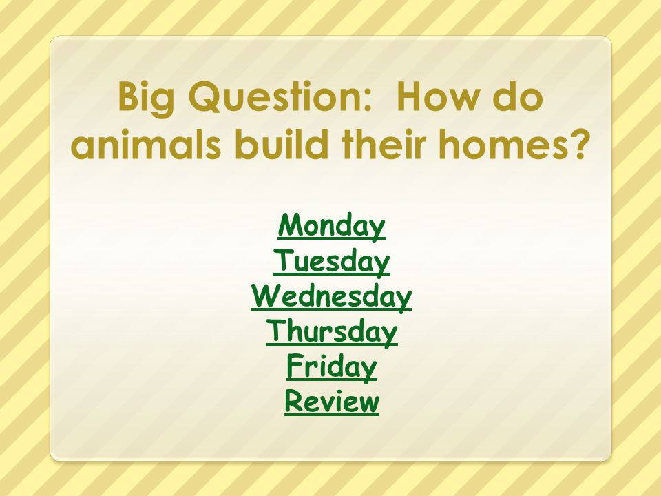 Big Question: How do animals build their homes