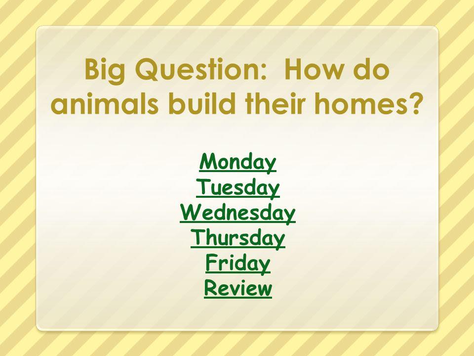 Big Question: How do animals build their homes