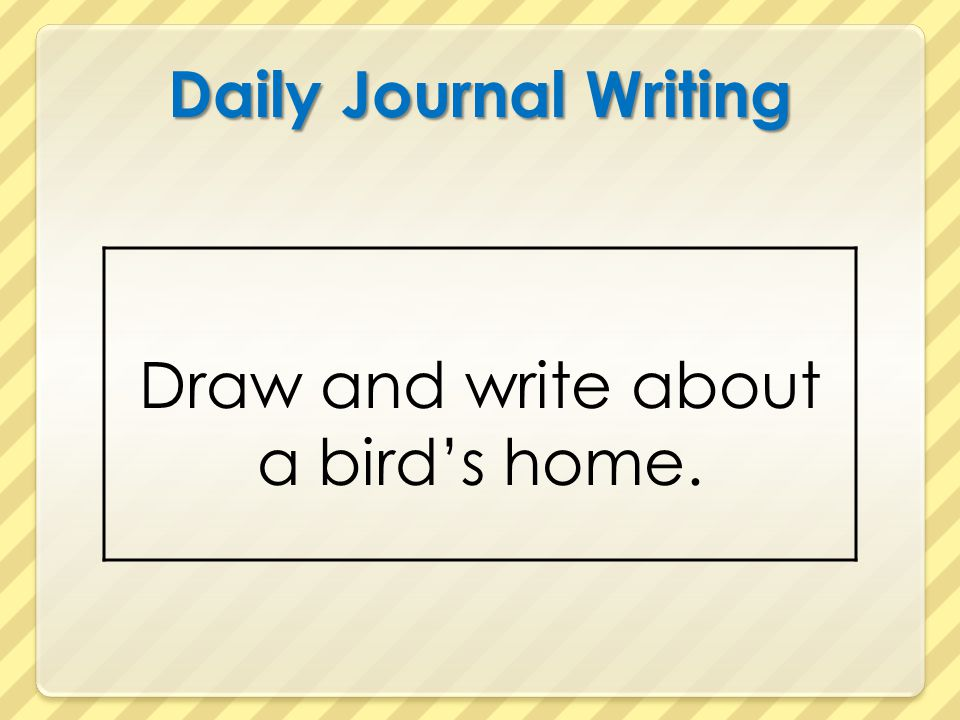 Draw and write about a bird's home.
