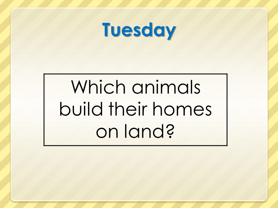 Which animals build their homes on land