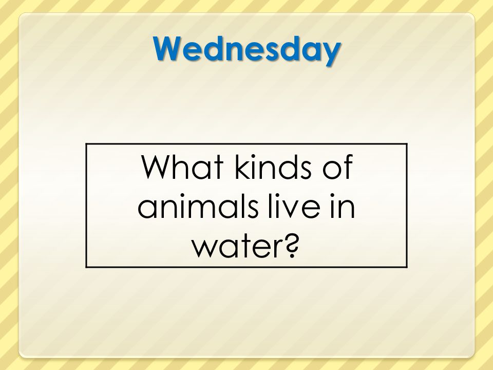 What kinds of animals live in water