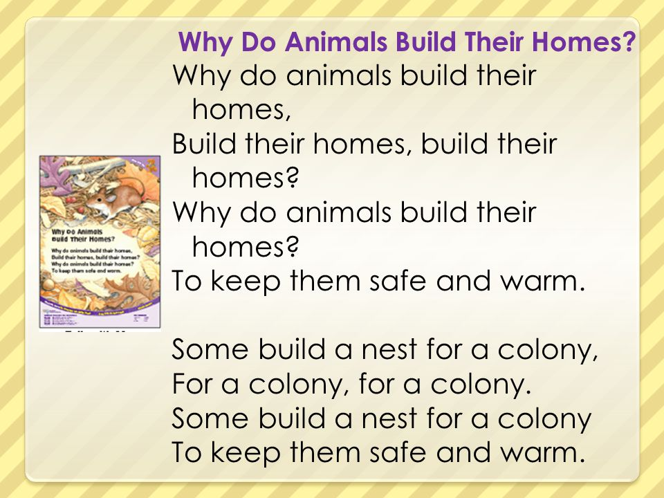Why Do Animals Build Their Homes