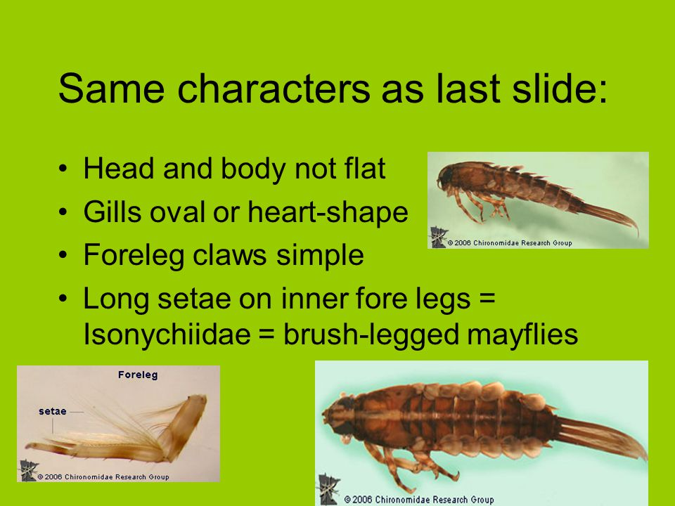 Same characters as last slide: