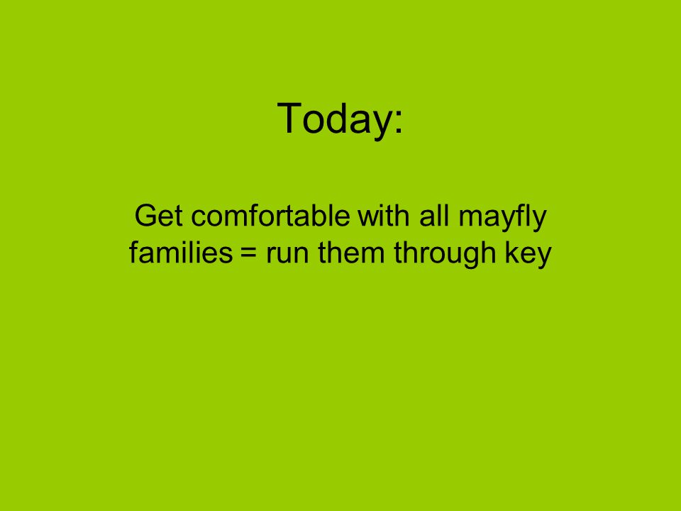 Get comfortable with all mayfly families = run them through key