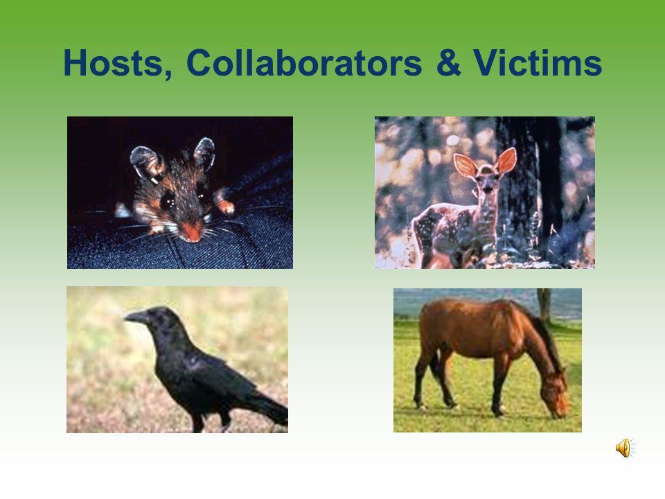 Hosts, Collaborators & Victims