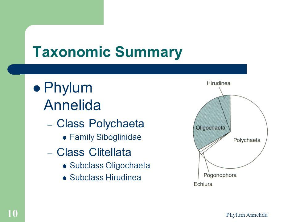 Taxonomic Summary Phylum Annelida Class Polychaeta Class Clitellata