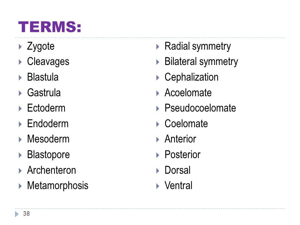 TERMS: Zygote Cleavages Blastula Gastrula Ectoderm Endoderm Mesoderm