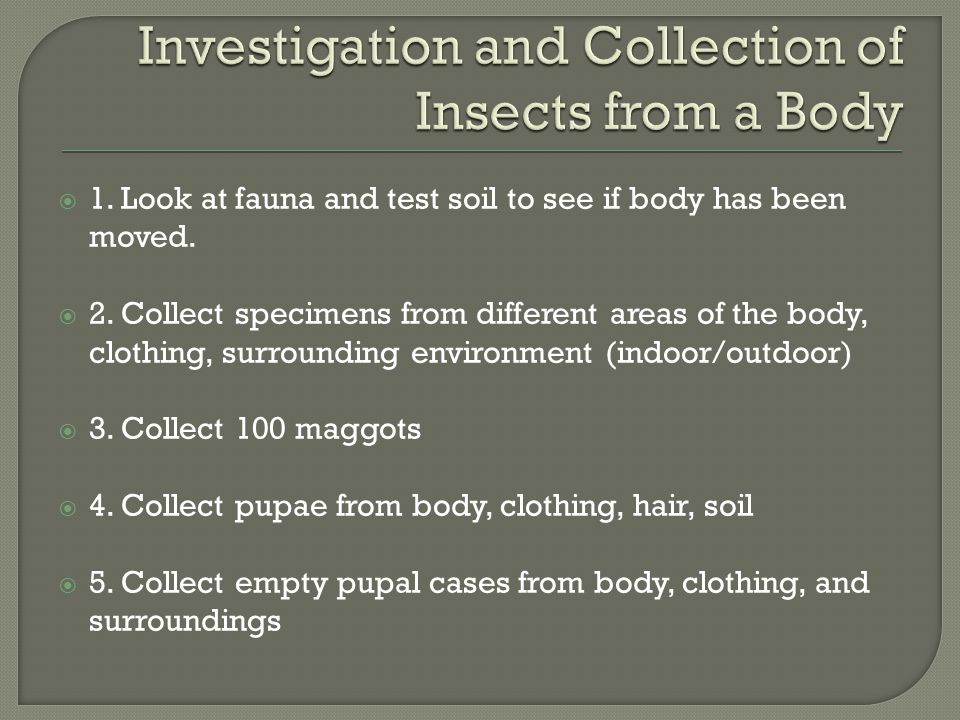 Investigation and Collection of Insects from a Body