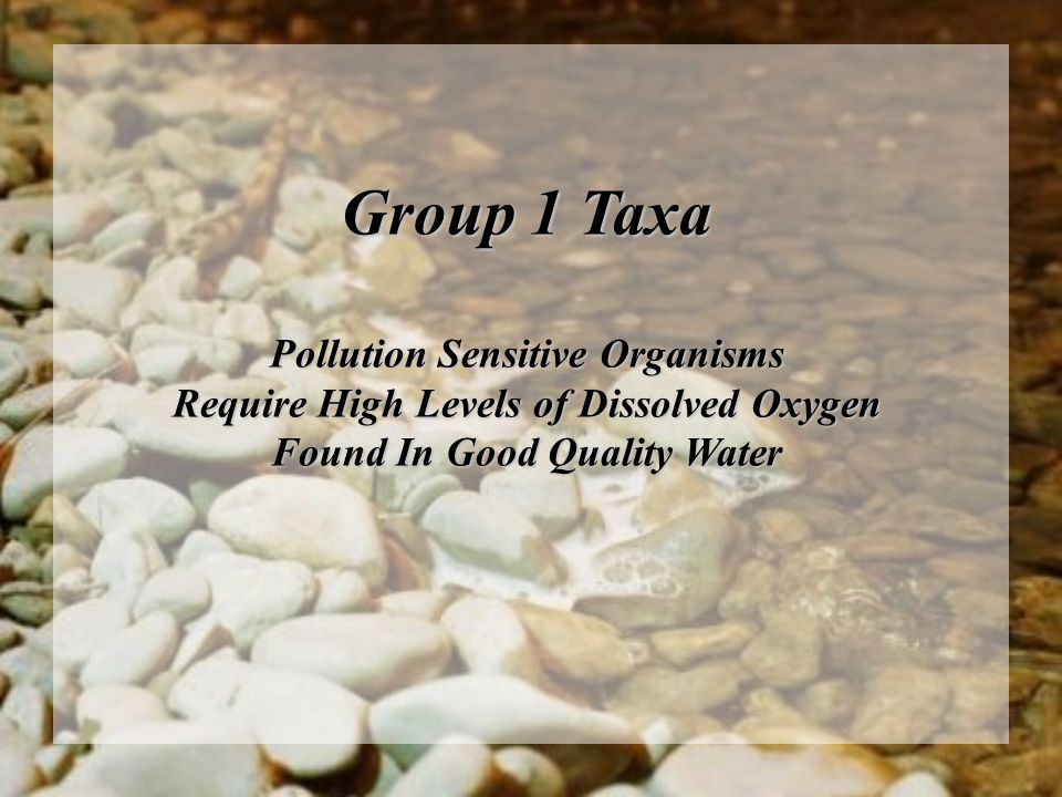 Group 1 Taxa Pollution Sensitive Organisms Require High Levels of Dissolved Oxygen Found In Good Quality Water