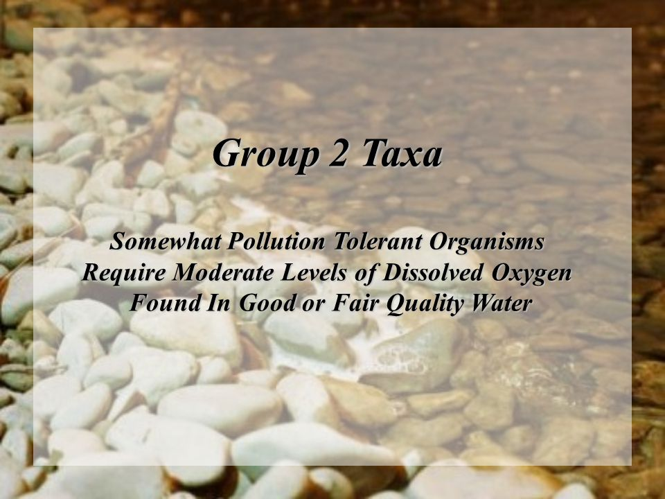 Group 2 Taxa Somewhat Pollution Tolerant Organisms Require Moderate Levels of Dissolved Oxygen Found In Good or Fair Quality Water