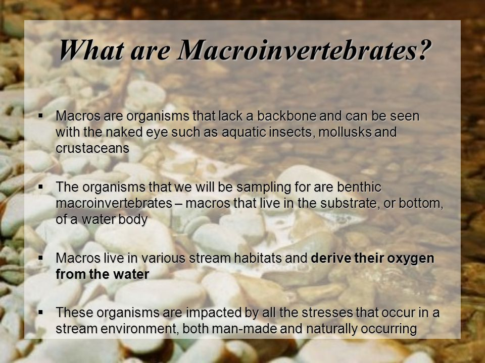 What are Macroinvertebrates