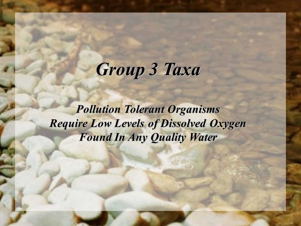 Group 3 Taxa Pollution Tolerant Organisms Require Low Levels of Dissolved Oxygen Found In Any Quality Water