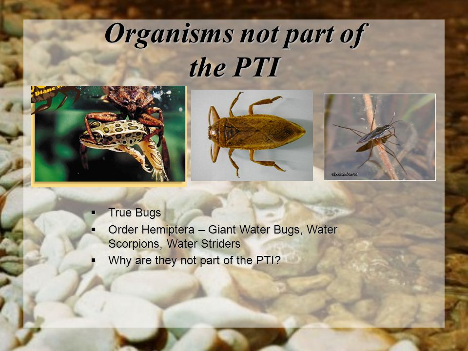 Organisms not part of the PTI
