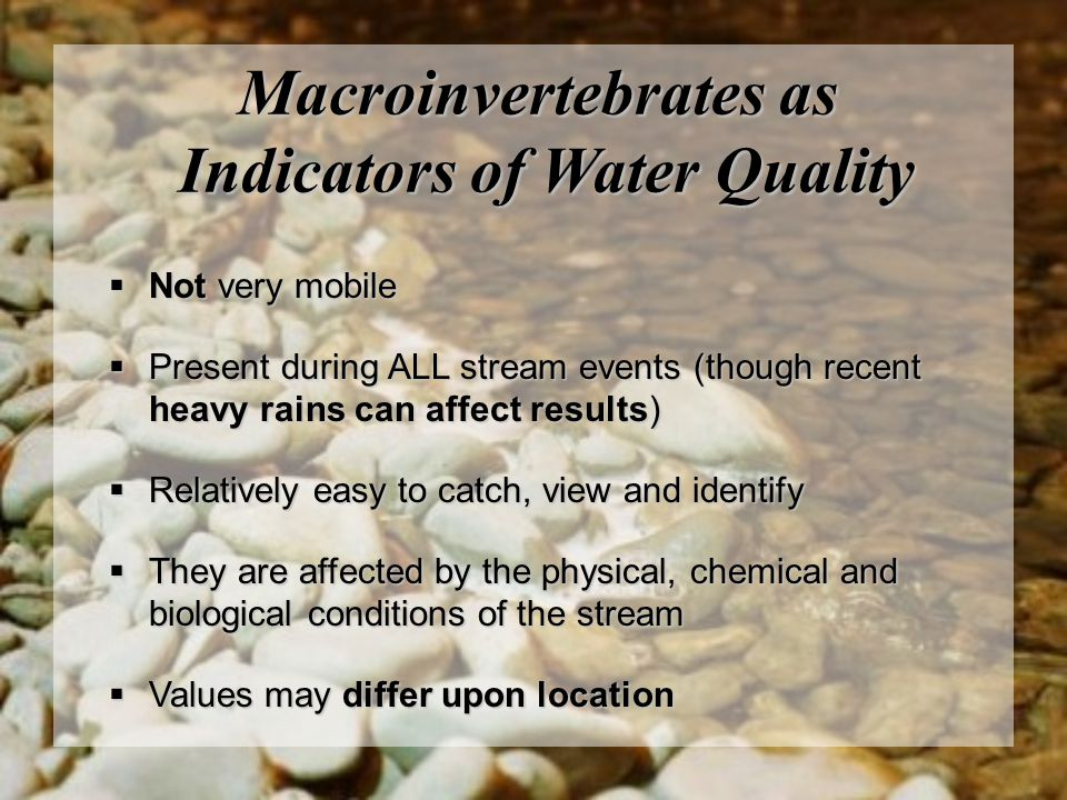 Macroinvertebrates as Indicators of Water Quality