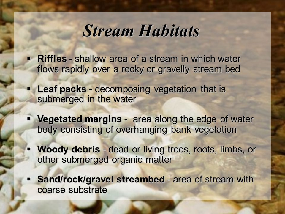 Stream Habitats Riffles - shallow area of a stream in which water flows rapidly over a rocky or gravelly stream bed.
