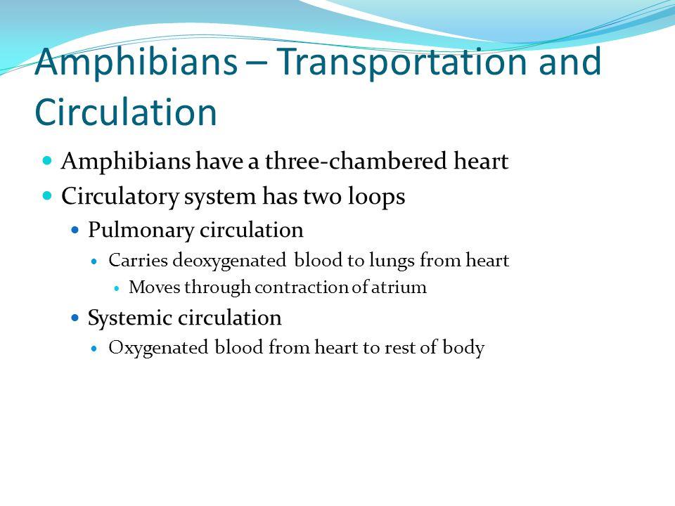 Amphibians – Transportation and Circulation