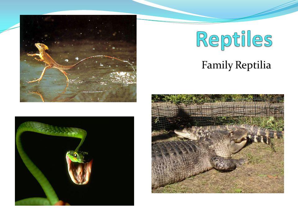 Reptiles Family Reptilia