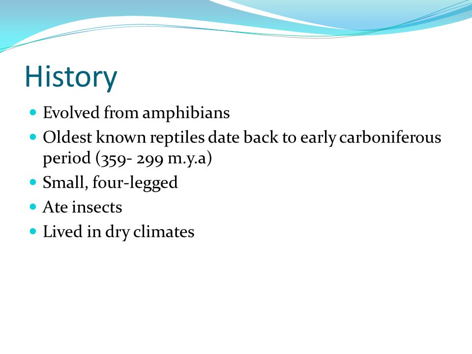 History Evolved from amphibians