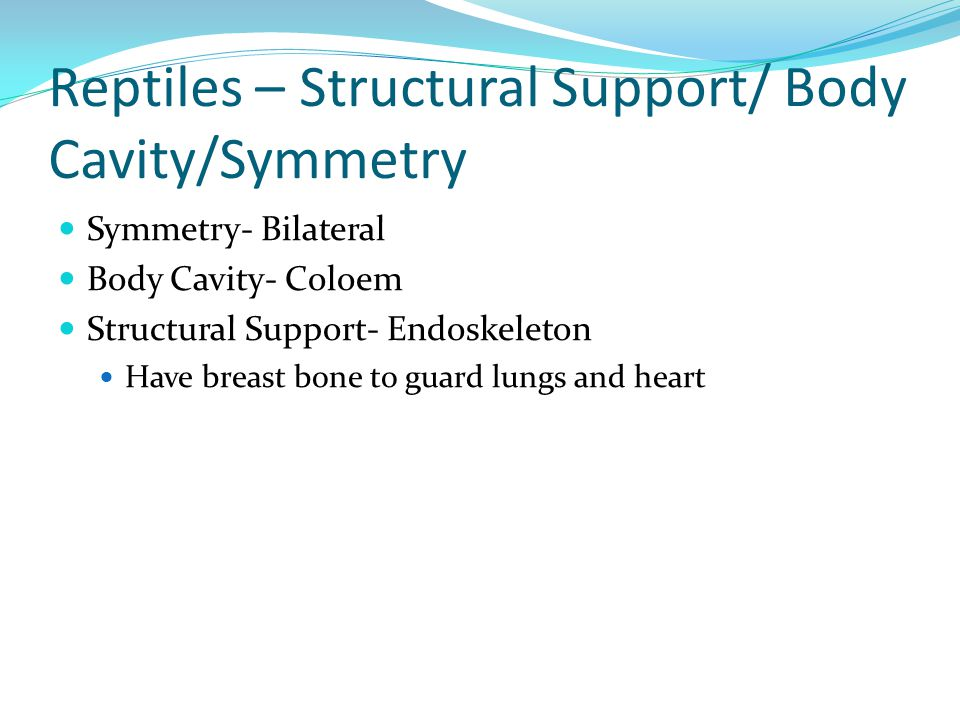Reptiles – Structural Support/ Body Cavity/Symmetry