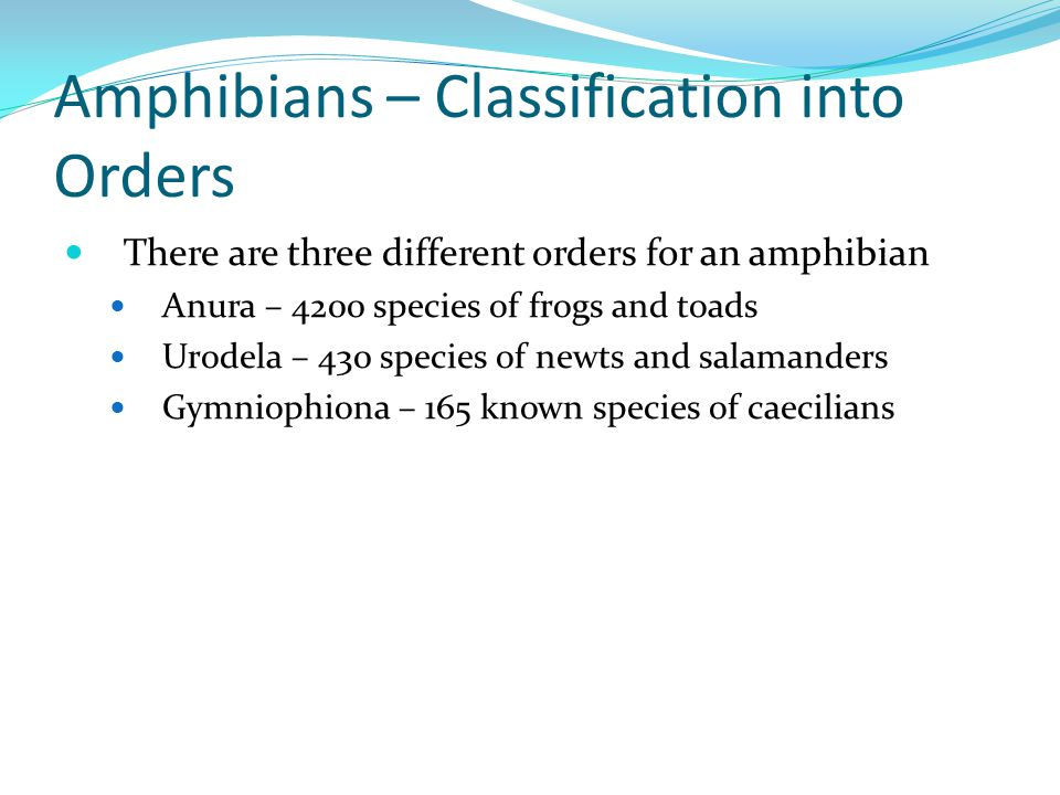 Amphibians – Classification into Orders