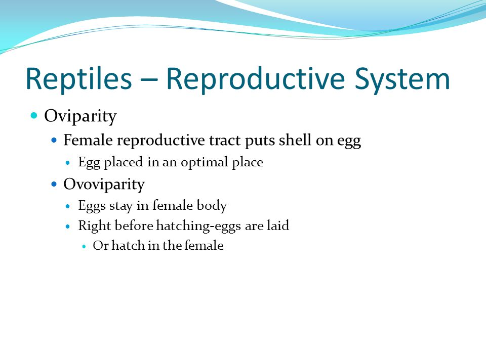 Reptiles – Reproductive System