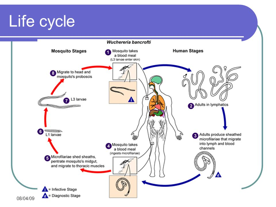 Life cycle 08/04/09