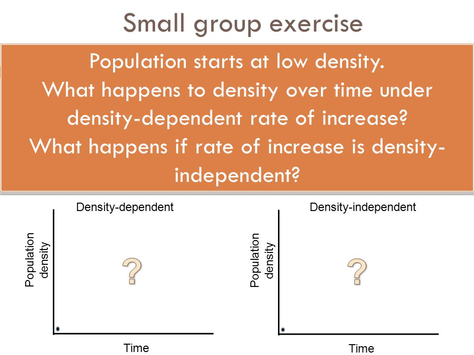 Small group exercise Population starts at low density.