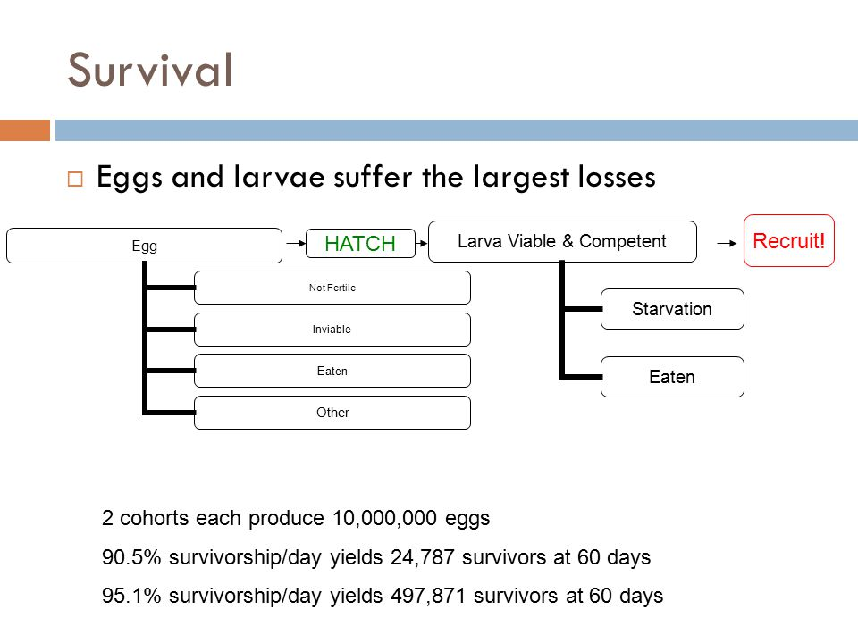Survival Eggs and larvae suffer the largest losses Recruit! HATCH