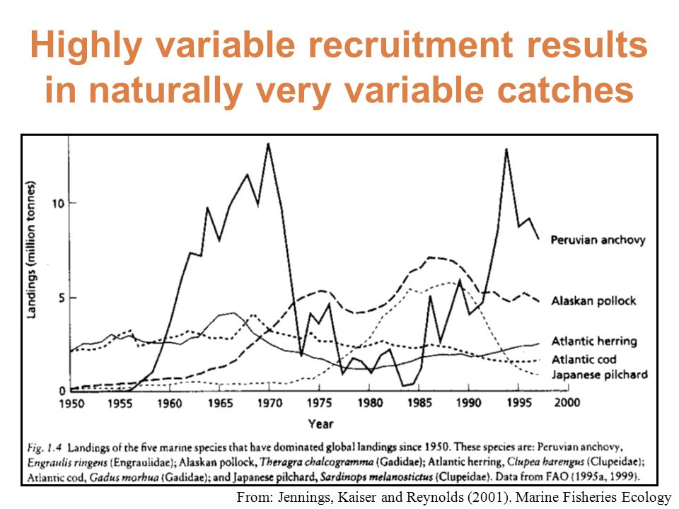 Highly variable recruitment results in naturally very variable catches