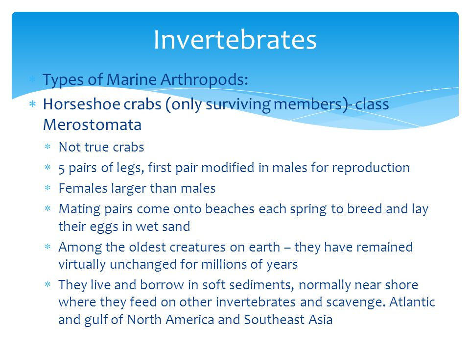 Invertebrates Types of Marine Arthropods: