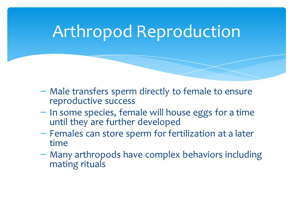 Arthropod Reproduction