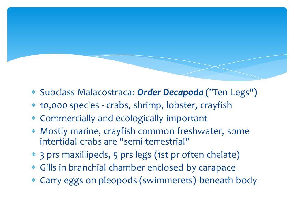 Subclass Malacostraca: Order Decapoda ( Ten Legs )