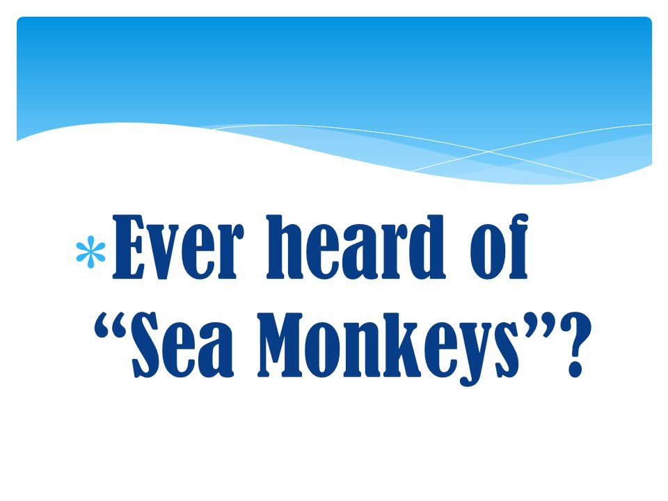 Ever heard of Sea Monkeys