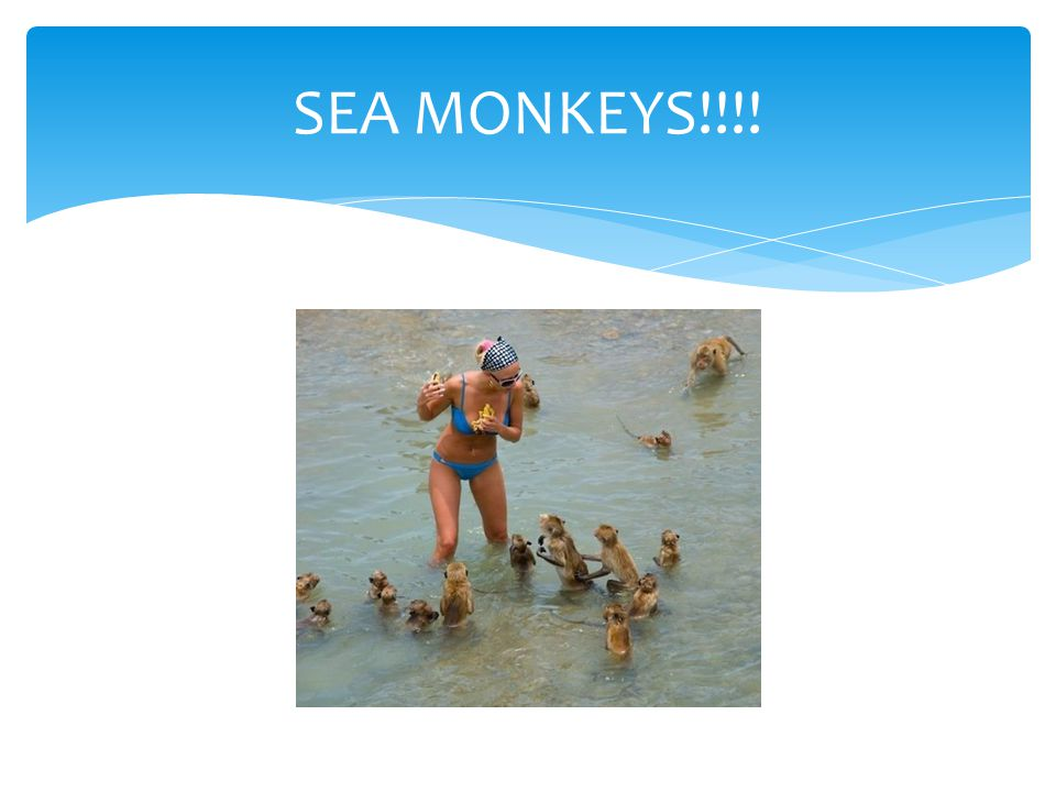 SEA MONKEYS!!!!