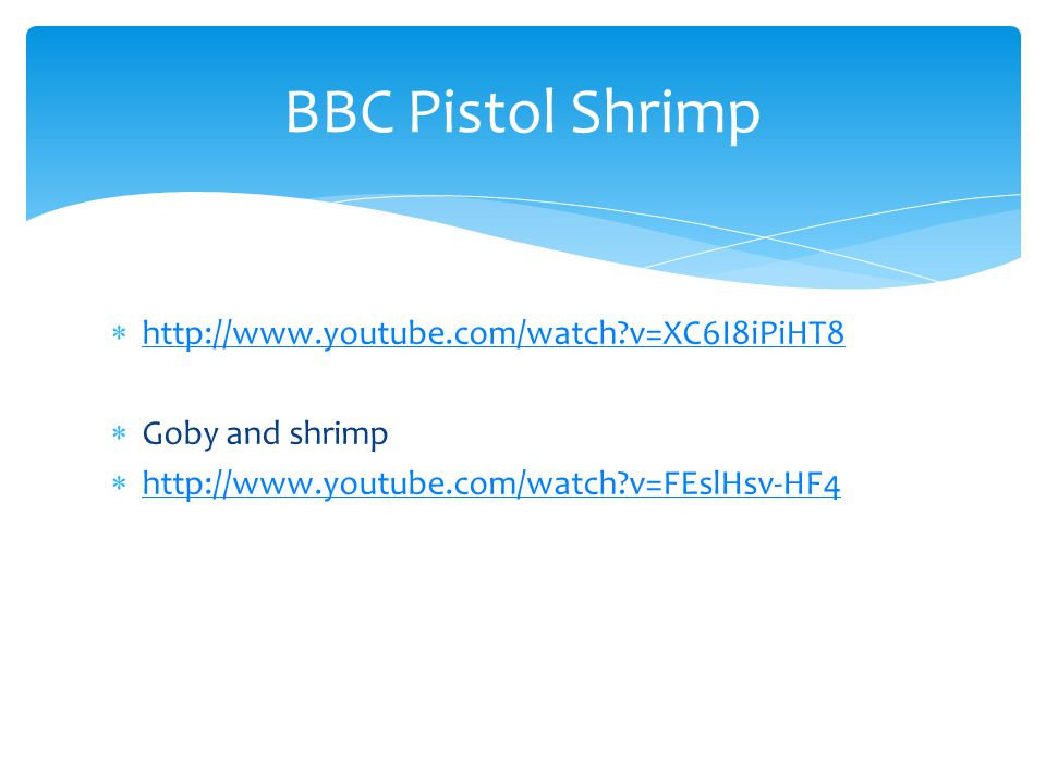 BBC Pistol Shrimp http://www.youtube.com/watch v=XC6I8iPiHT8