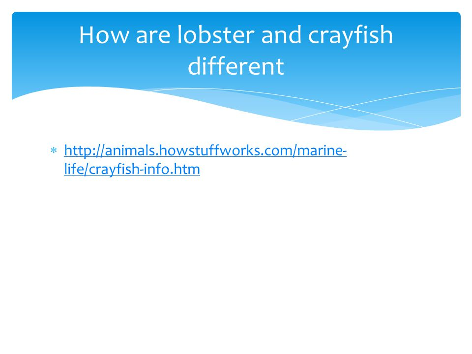 How are lobster and crayfish different