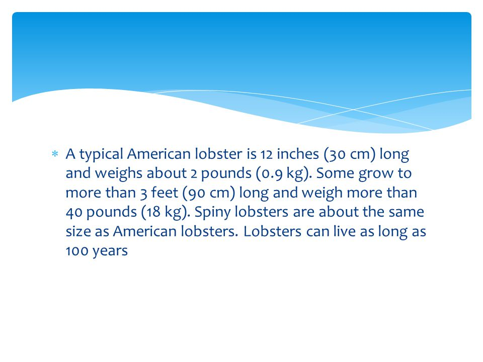 A typical American lobster is 12 inches (30 cm) long and weighs about 2 pounds (0.9 kg).