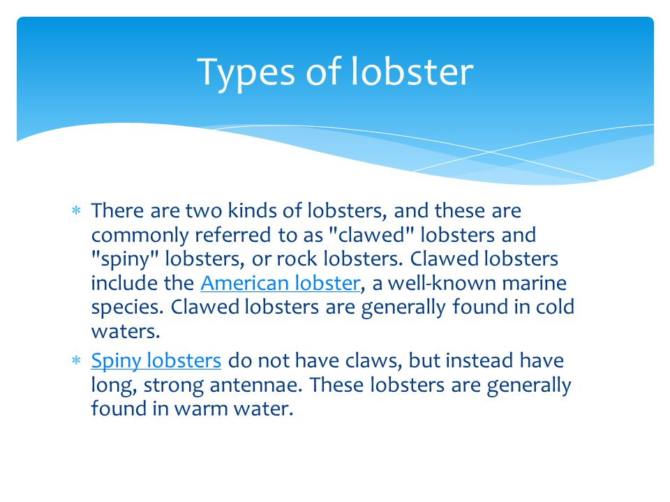 Types of lobster