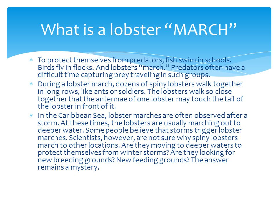 What is a lobster MARCH