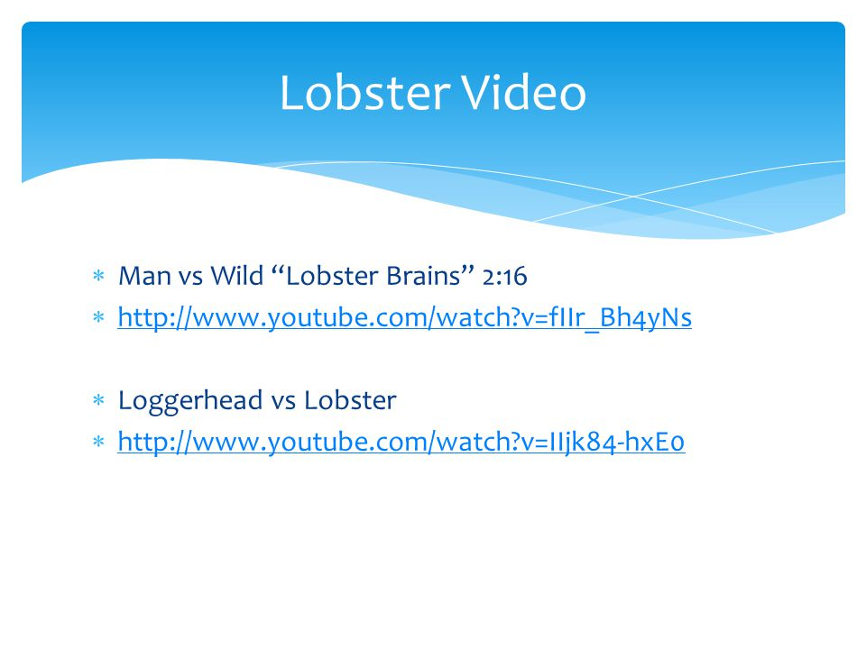 Lobster Video Man vs Wild Lobster Brains 2:16