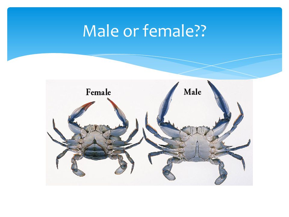 Male or female