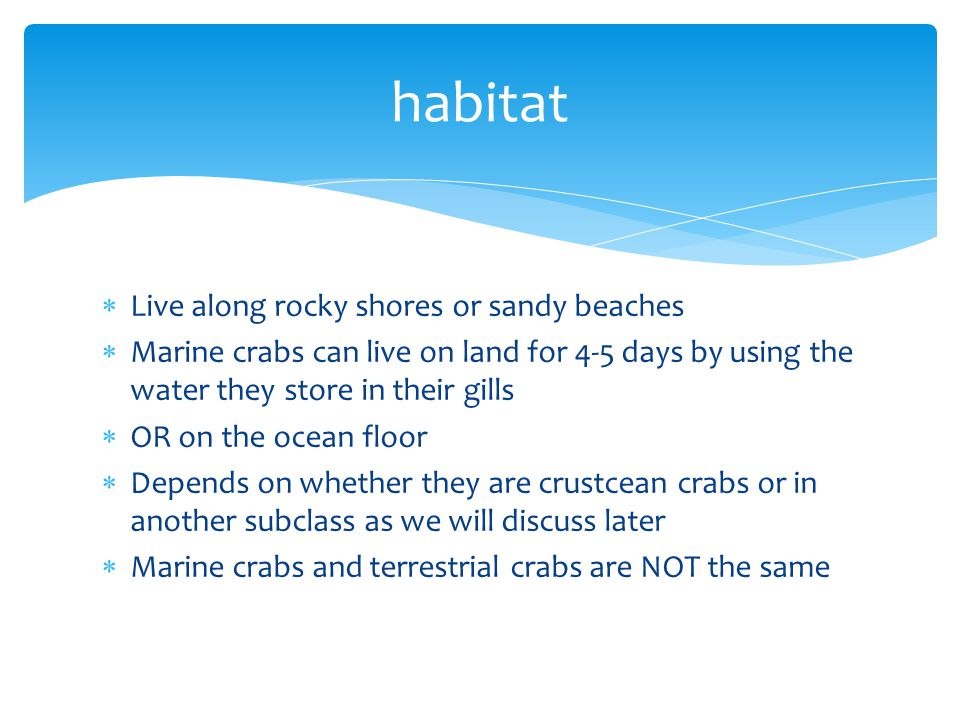 habitat Live along rocky shores or sandy beaches